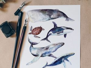 Limited Edition Watercolour Whale Prints